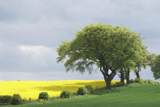 Picture of trees in the english landscape